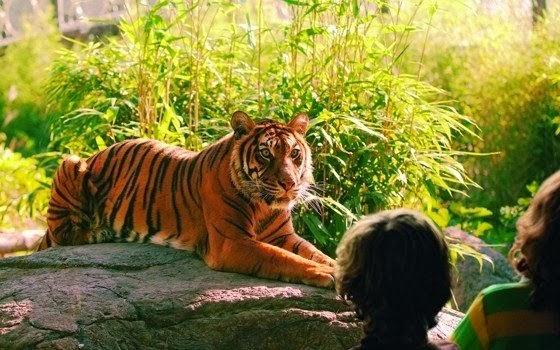 Tigre em zoológico na Holanda