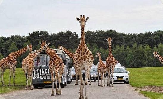 Safaripark Beekse Bergen na Holanda