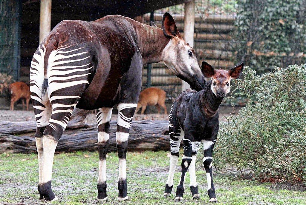 Animais no Jardim Zoológico de Berlim na Alemanha