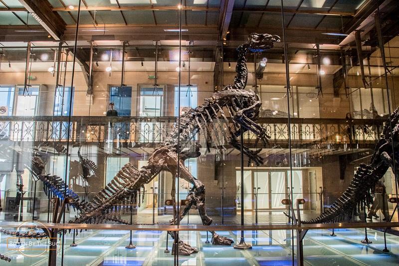 Museu de Ciências Naturais de Bruxelas | Bélgica