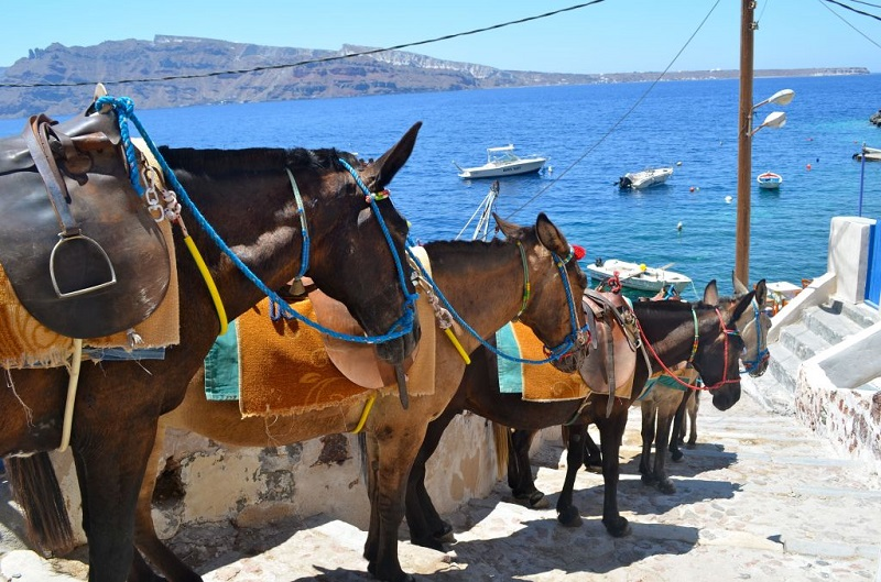Passeio de mula pelas escadarias de Fira em Santorini