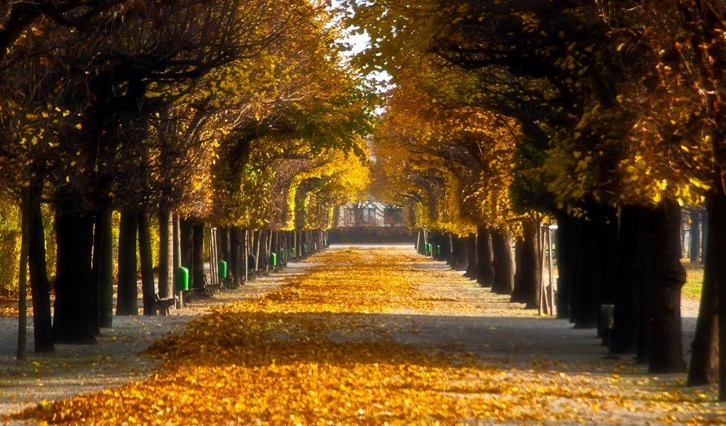 Outono em Viena