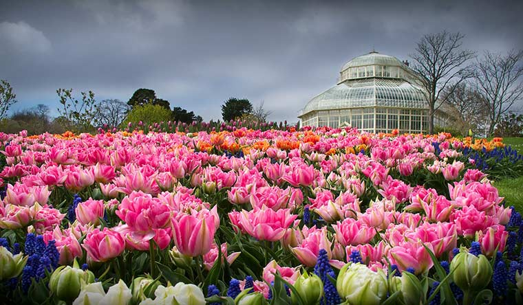 Jardim Botânico de Dublin